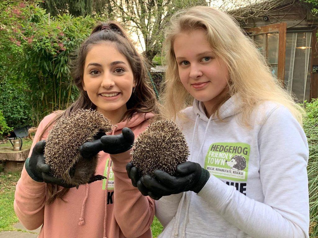 13-летние школьницы спасли 400 ежей во время каникул