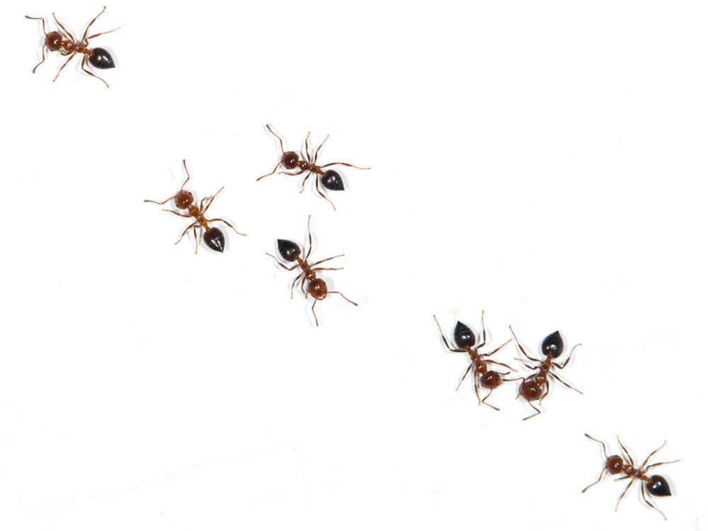 Скраб, средство от муравьев, освежитель воздуха: я нашла 10 новых применений для старых апельсинов
