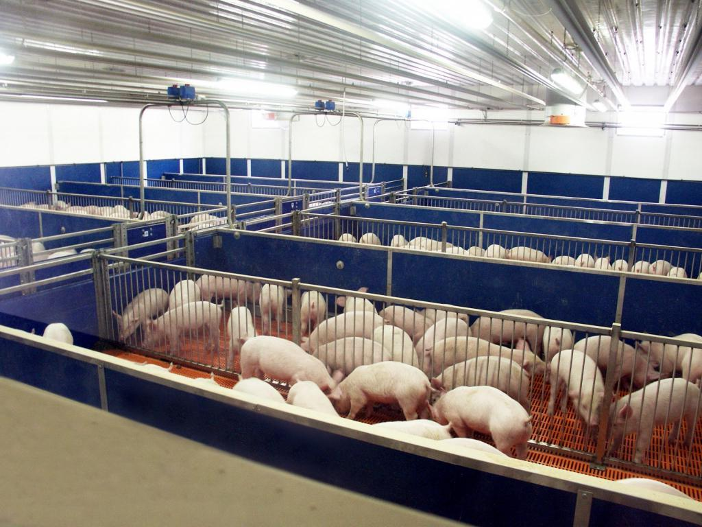 Все идет на пользу: на свиноферме в Пекине разрабатывают технологию переработки отходов в энергию