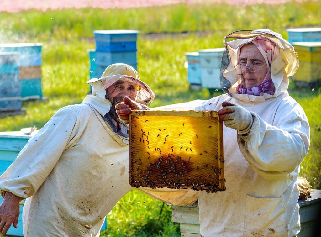 Мой дед - потомственный пасечник. Он рассказал, как отличить натуральный мед от подделки