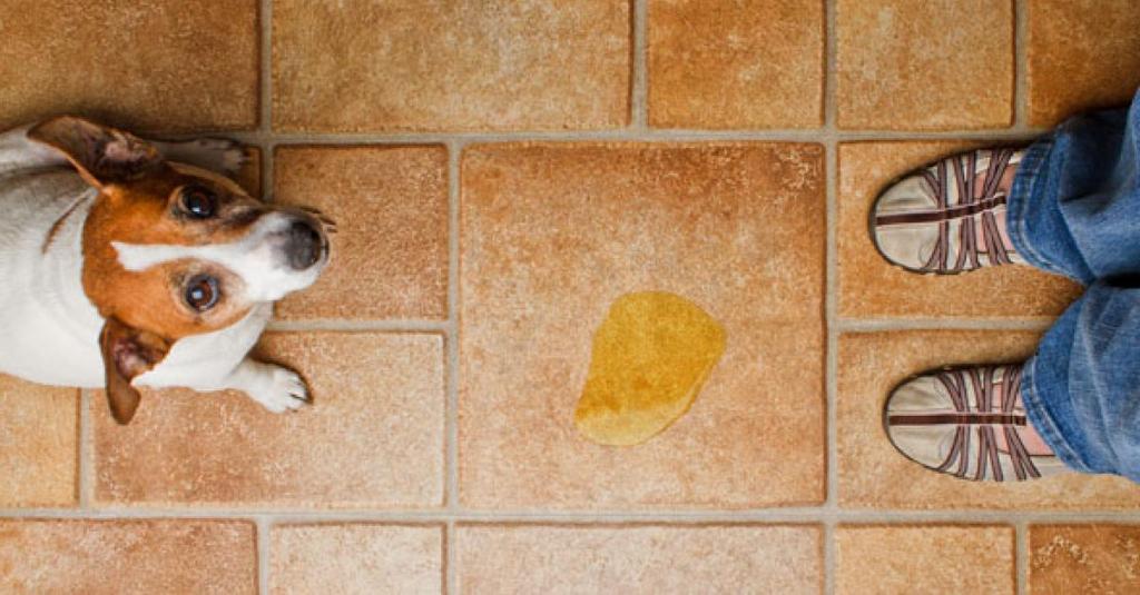Решила завести щенка. Мама дала полезный совет, как в случае необходимости убрать из дома собачий запах