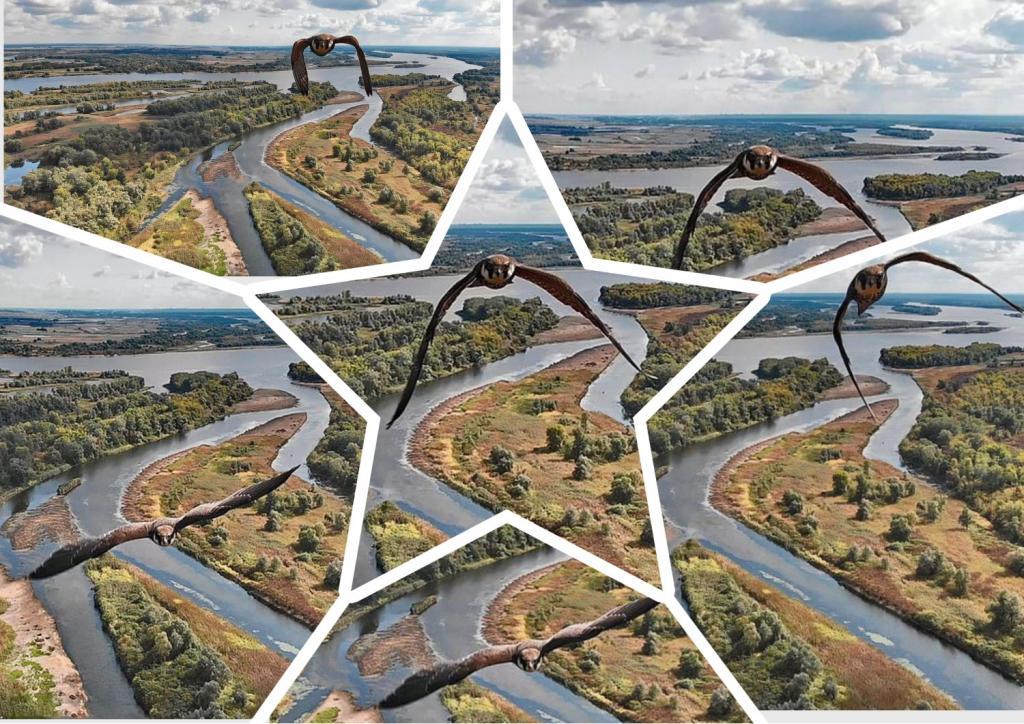 С высоты птичьего полета: дрон захватывает удивительные изображения сокола, подлетающего к нему