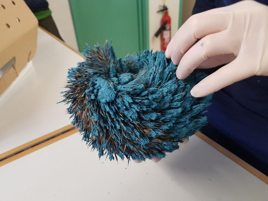 Люди нашли в саду странный синий шарик: когда отмыли его, поняли, что это животное