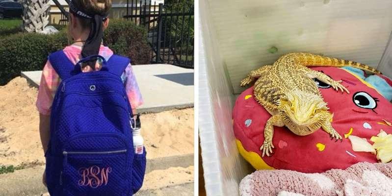 Девочка взяла на занятия в школу свою домашнюю ящерицу. Она посчитала, что ей одной дома будет скучно
