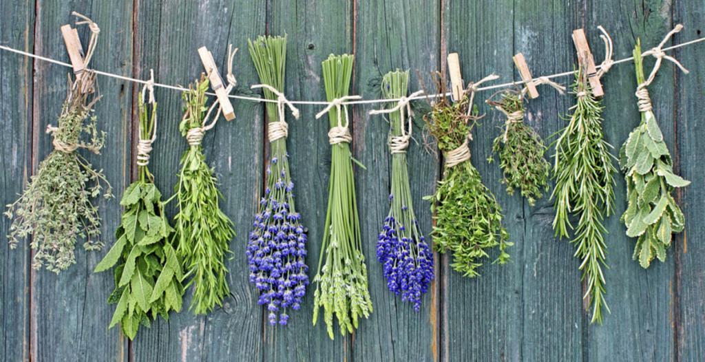 10 ароматических трав, которые можно выращивать в воде в течение всего года: мята, розмарин и другие