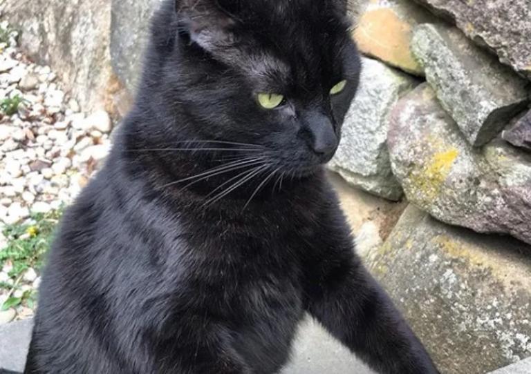 Женщина подобрала брошенного черного котенка. Через пару месяцев его внешний вид напугал знакомых хозяйки (фото)
