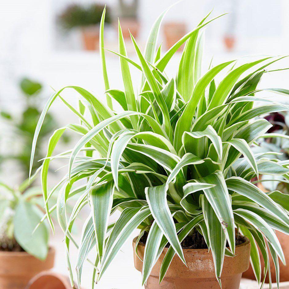 Тенелюбивые комнатные растения фото с названиями был искренне