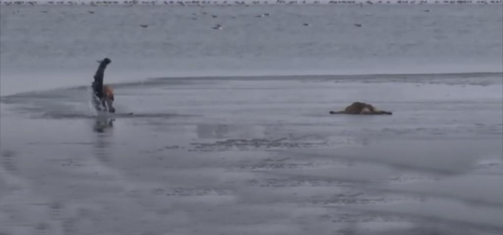 Прохожие заметили щенка, плывущего на льдине, и вызвали полицию. Офицер не побоялся холода и спас малыша
