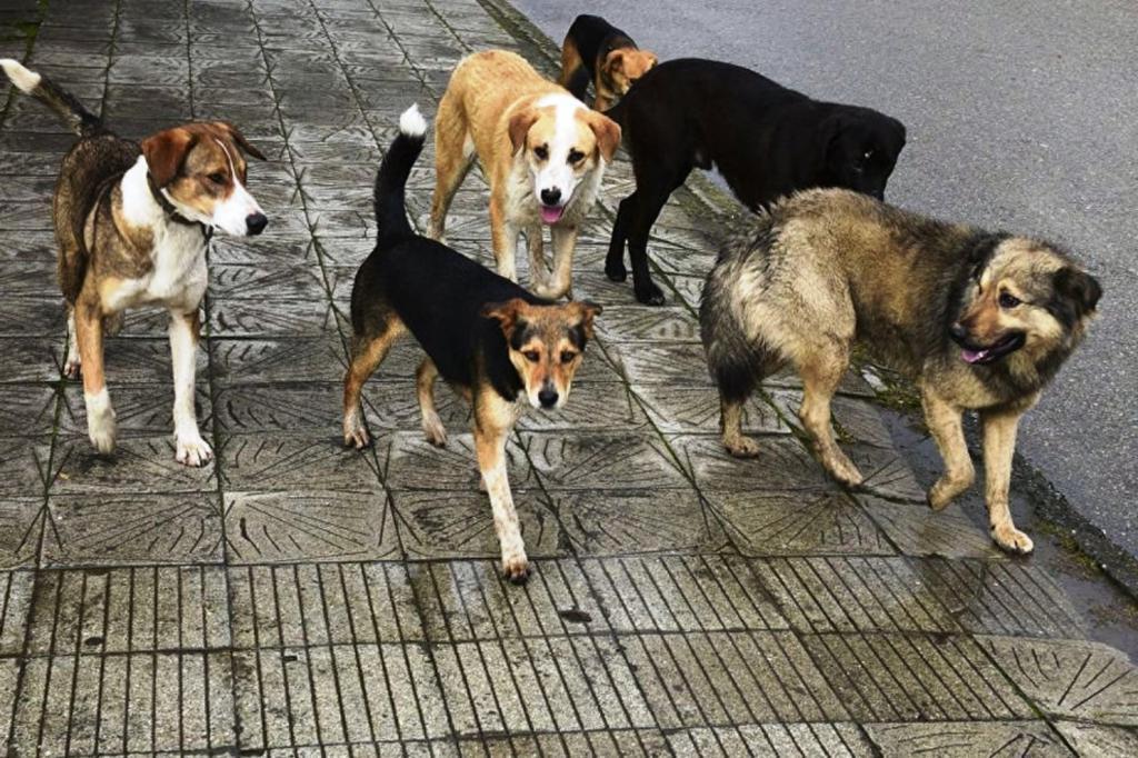 стартует стая бродячих собак картинки то, чего желаете