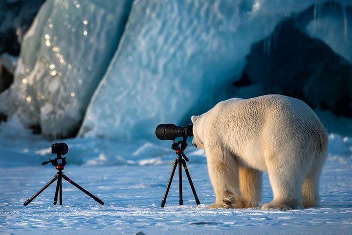 Подборка снимков конкурса «Лучшая комедийная фотография животных 2019 года»