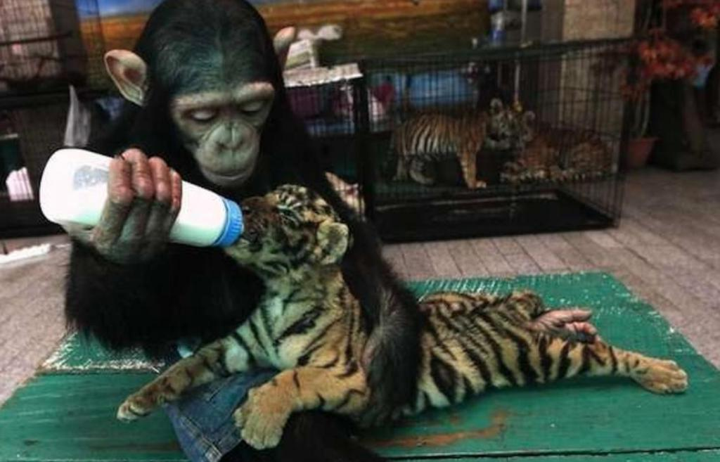 Животные тоже способны сопереживать: 10 фотографий животных, чья нежность может растопить любое сердце