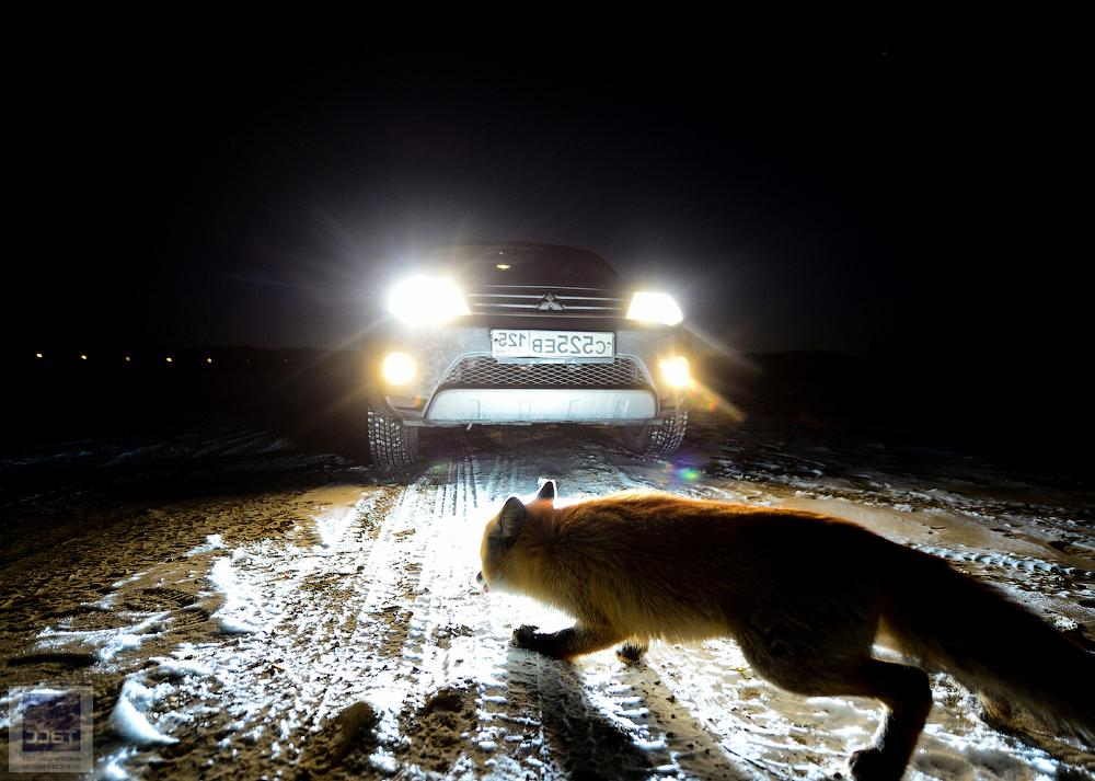 Дикие животные часто перебегают нам дорогу. Но это происходит неспроста   так мы получаем подсказки