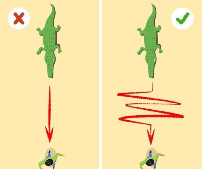 9 вещей, которые могут спасти вашу жизнь: как развести огонь с помощью аккумулятора телефона или как правильно убегать от крокодила