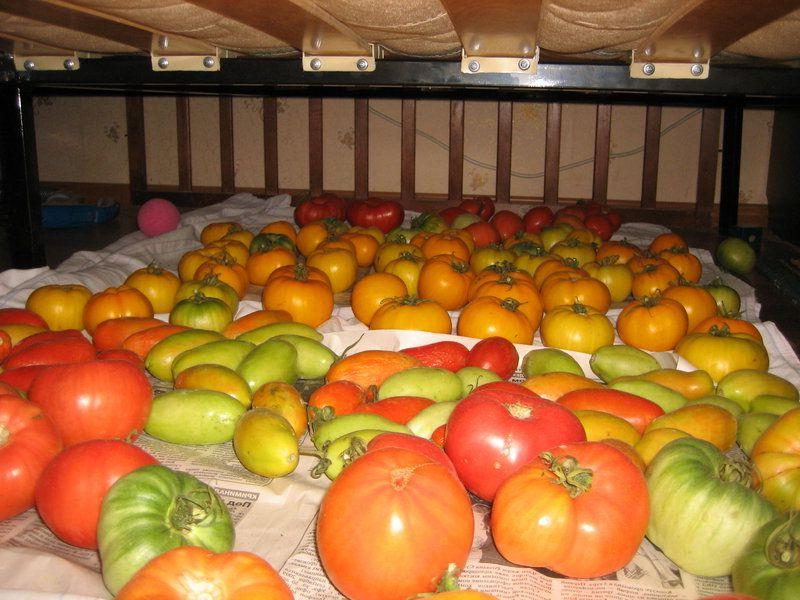 Как сохранить свежие помидоры до весны в домашних условиях: проверенные способы