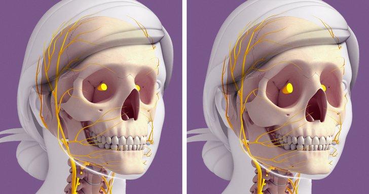 Кожа теряет эластичность, а кости становятся хрупкими: как наше тело меняется после 30 лет и почему лицо стареет быстрее