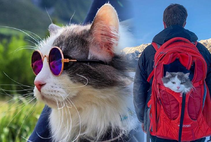 Кот, который не представляет жизни без приключений, хозяина одного в походы не отпускает