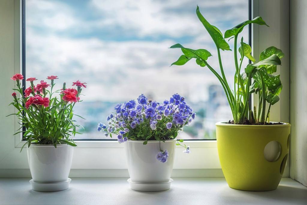 Заказ цветов, популярные цветы в доме для счастья