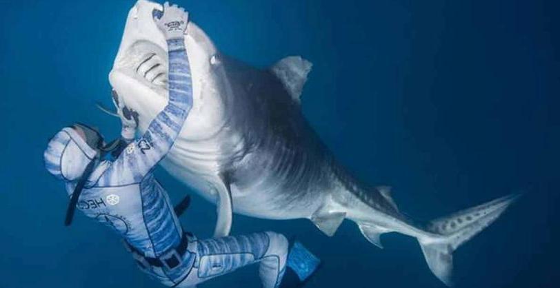 Как выглядит смелость: парень успокаивает акулу одним лишь прикосновением своей руки