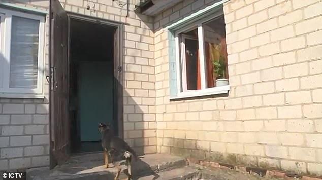 В Украине женщина отрубила пенис мужа и скормила его собакам