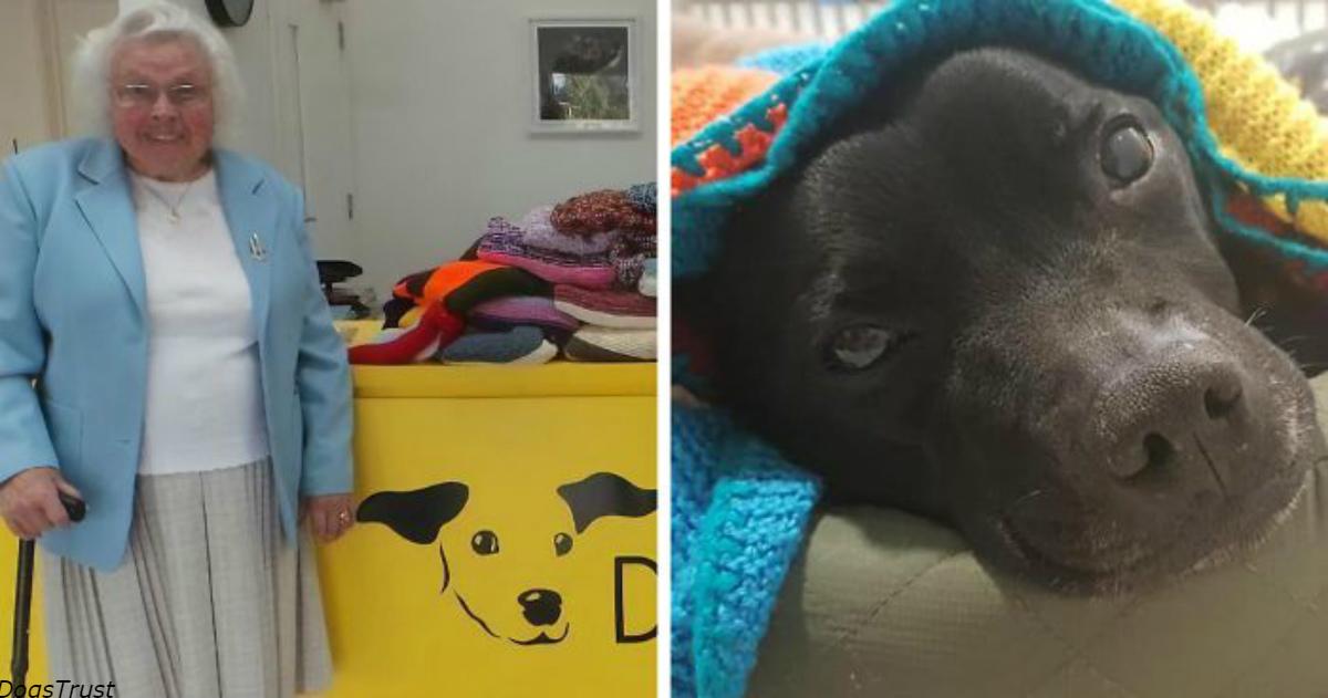 Эта 89 летняя женщина связала 450 одеял и свитеров для собак из приютов