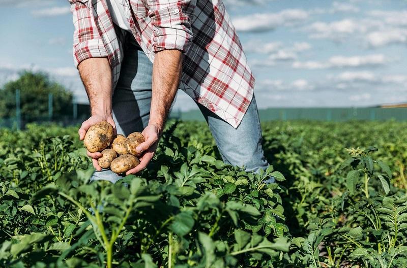 Кто не должен есть картофель? Большинство людей, страдающих гипертонией, этого не знают и продолжают наслаждаться этим продуктом