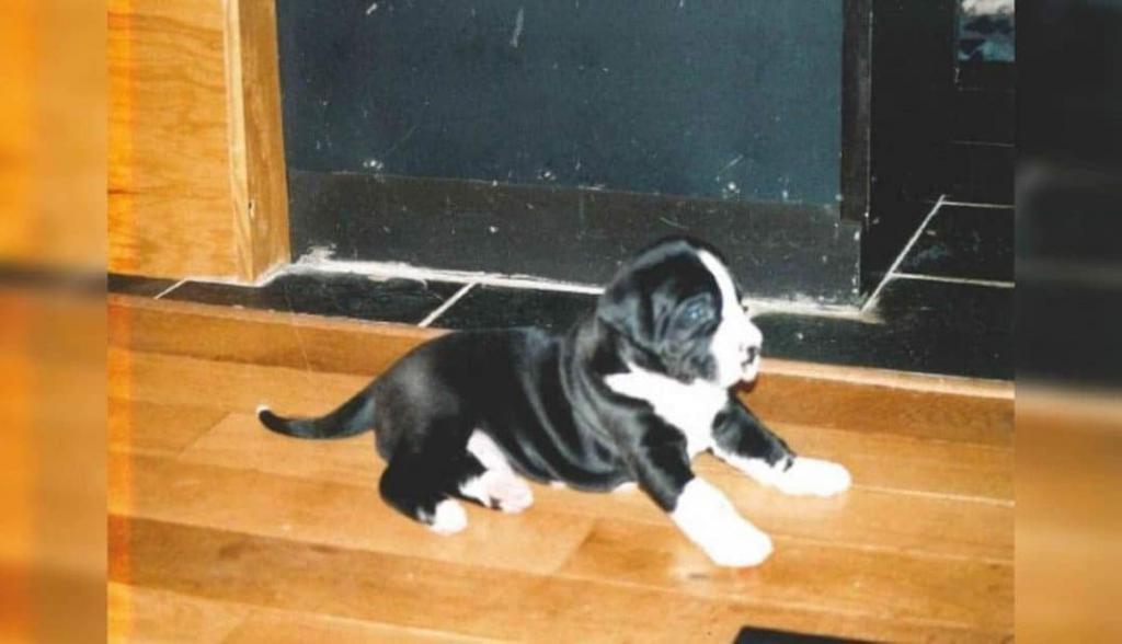 Пара приютила очаровательного щенка. Спустя некоторое время он стал невероятных размеров: фото