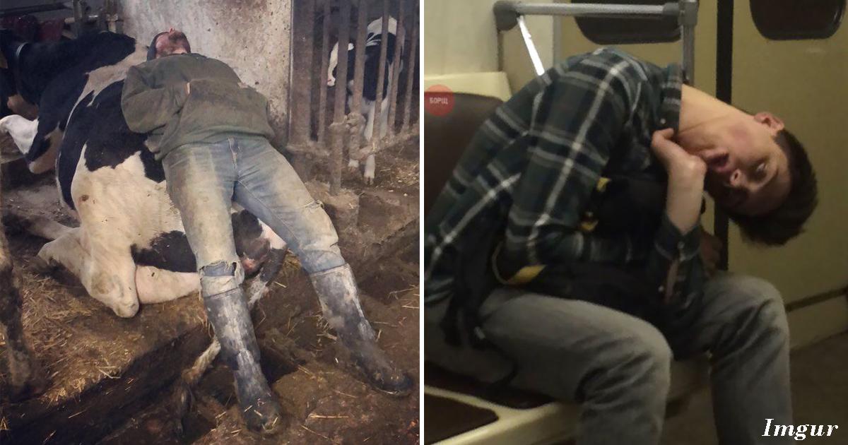 25 людей и животных, которые смогли уснуть в самых невероятных местах и позах