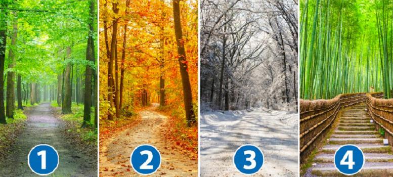 Зима, весна, лето или осень? То, какую дорогу вы выберете, раскроет некоторые черты вашего характера