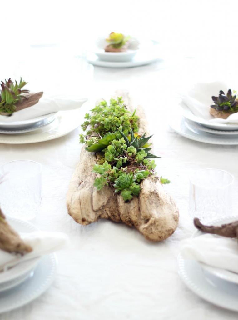 Мои любимые растения   суккуленты: я придумала отличную альтернативу горшкам и выращиваю их прямо на коряге