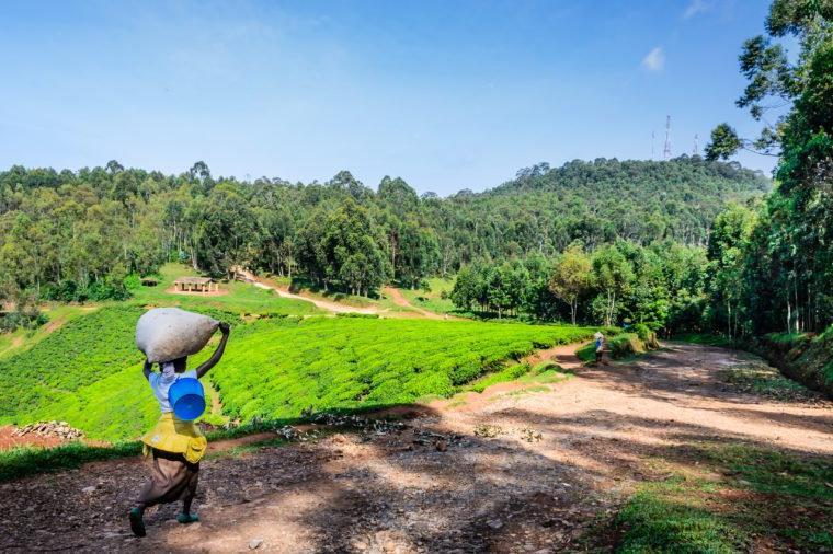 Руанда - африканская страна с большими амбициями в сфере экологии: как она стала одной из самых чистых стран на планете