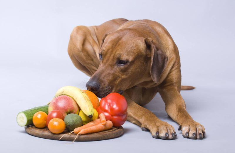 Диета Для Собак Цена