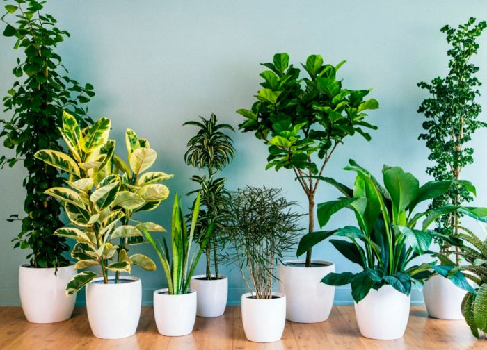 Папоротник, алоэ, фикус: растения экстрасенсы, которые есть у вас дома