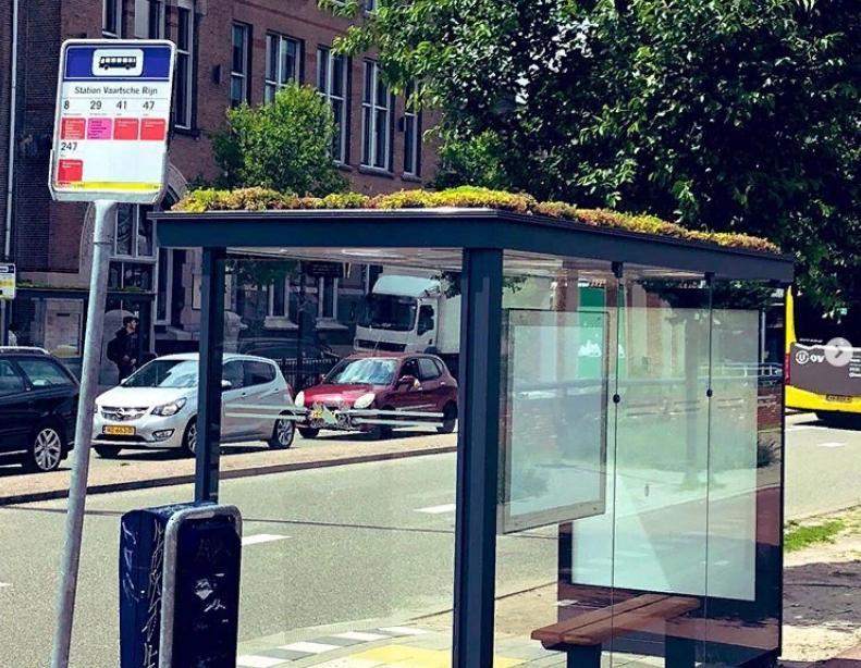 В Голландии с особым уважением относятся к пчелам: 320 обычных автобусных остановок были покрыты газоном и дикими растениями, чтобы насекомые могли добывать пыльцу