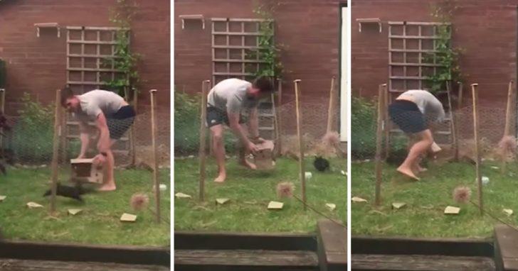 Насмеялась от души. Женщина сняла видео, как ее сосед безуспешно пытается поймать кролика