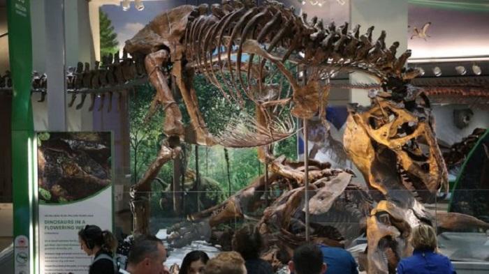Продажи останков древних животных приобретают все большую популярность, но научное общество взволновано ценами