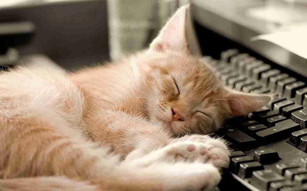 Теплое местечко для сна: американские ученые придумали, как защитить клавиатуру от домашних животных
