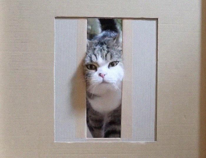 Владелец кошачьего приюта провел забавный эксперимент: насколько узкой может быть щель, чтобы в нее протиснулась кошка