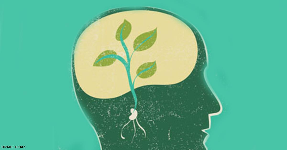 ″Стабильность″ и ″Рост″: 2 модели мышления, которые формируют вашу судьбу