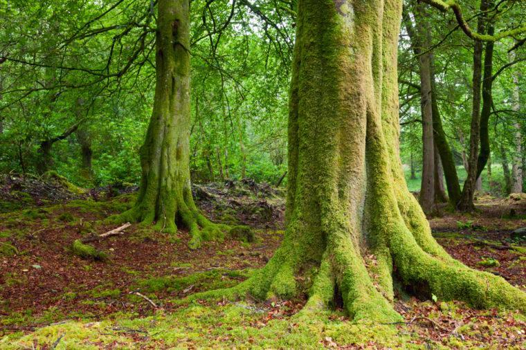 12  заколдованных  лесов по всему миру, которые на самом деле существуют: местные жители неспроста обходят их стороной