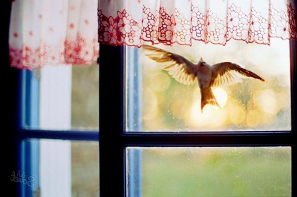 Птица постучала в мое окно. Я испугалась, ведь это плохая примета. Но бабушка рассказала, что нужно делать, чтобы она не сработала