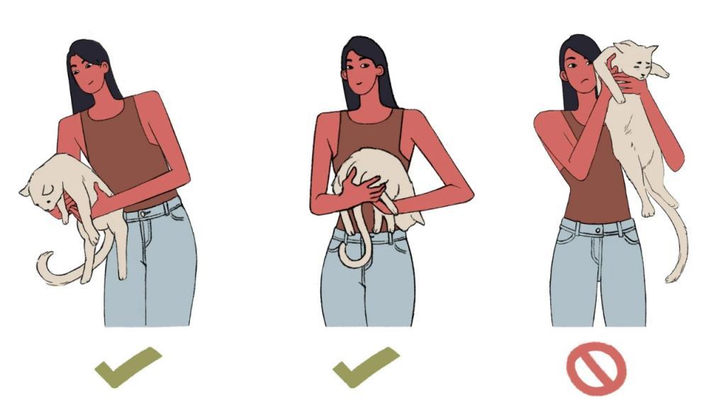 Веселая инструкция котоводам: как правильно держать кота. Некоторые способы могут удивить