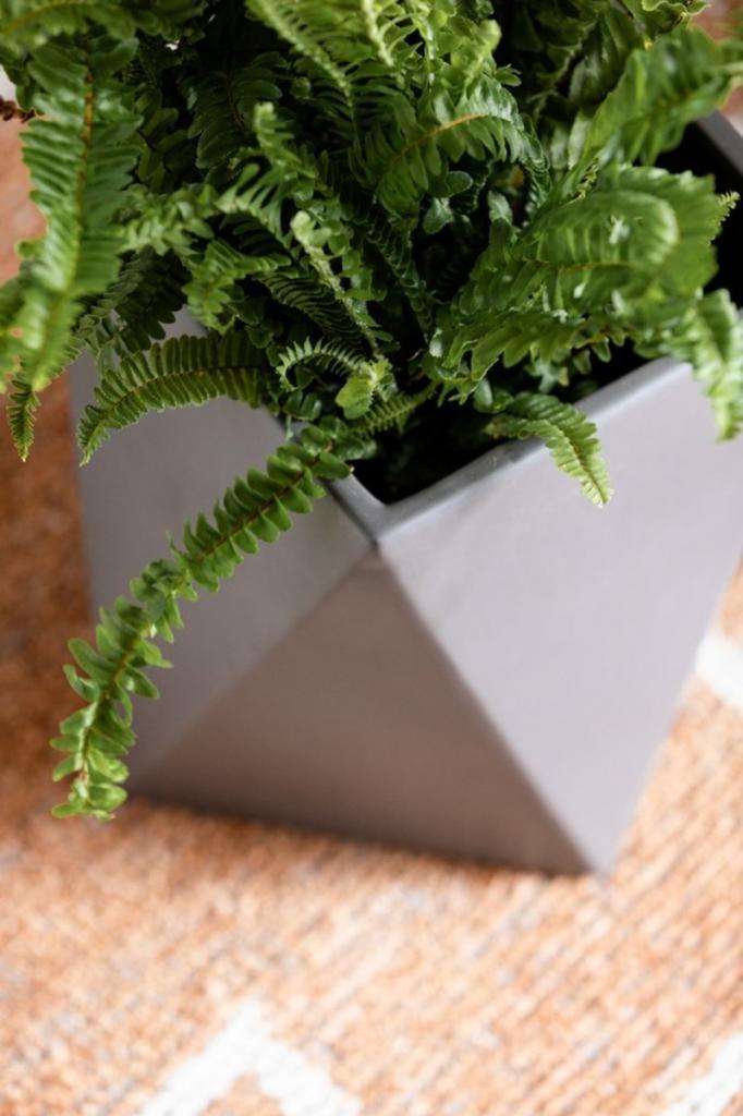 Знакомый флорист рассказал о растениях, которые отлично впишутся в интерьер прихожей: кодиеум, спатифиллюм и др.