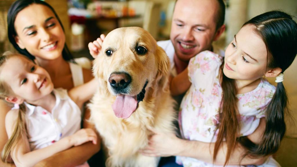 Собака не просто друг. Крепкое здоровье и другие причины завести питомца