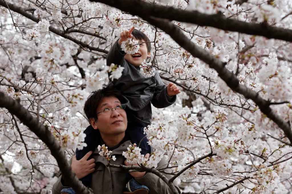 Мой друг от японцев в восторге: по его словам, это трудолюбивые, любознательные люди