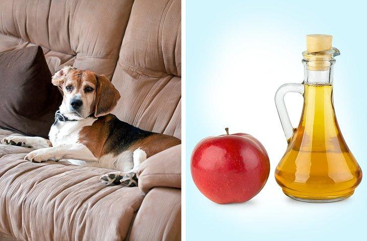 У меня в квартире живет и кошка, и собака. Некоторые хитрости помогают мне бороться с запахами так, что их нет вообще
