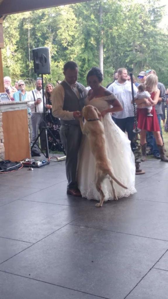 Собака по кличке Ева решила присоединиться к свадебному танцу молодоженов. Получилось милое и приятное зрелище