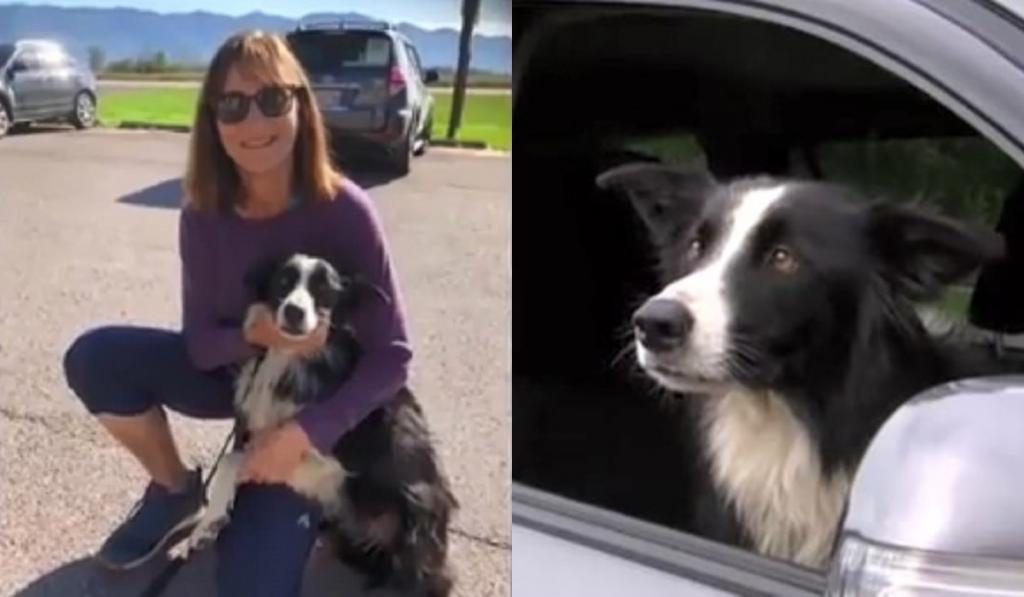 Чтобы найти свою собаку, женщина уволилась с работы и потратила на поиски 2 месяца