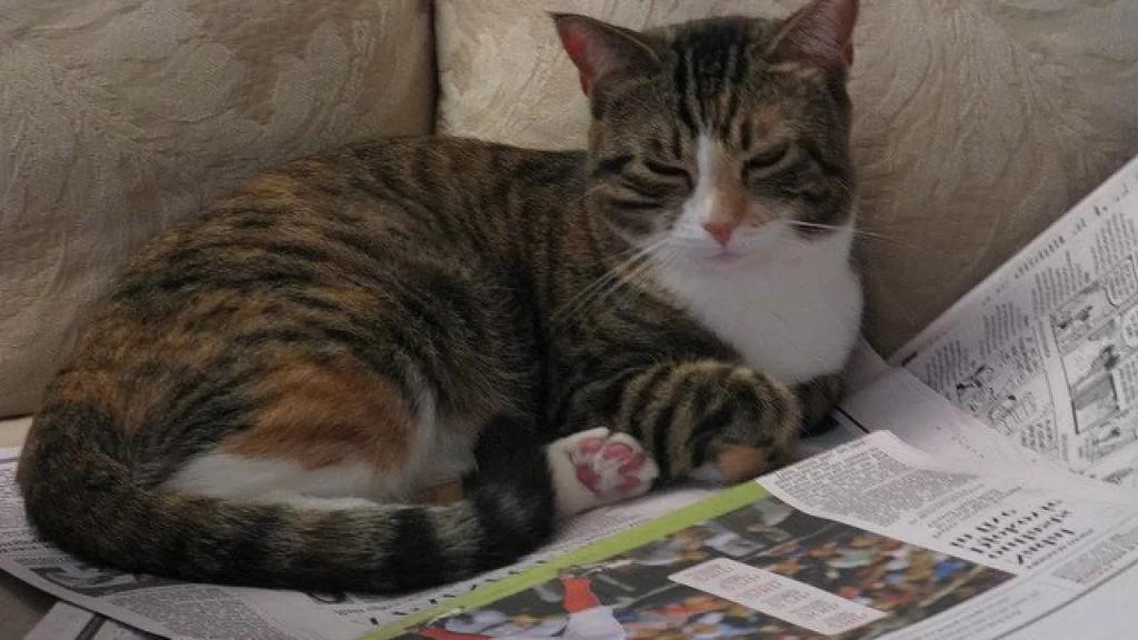 Что скрывается за привычками домашних питомцев, или Почему кошкам так нравятся коробки, бумага и полиэтиленовые пакеты