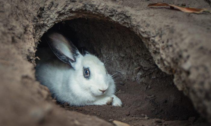 Мужчина заглянул в обычную кроличью нору и не поверил своим глазам: внутри оказалась загадочная пещера