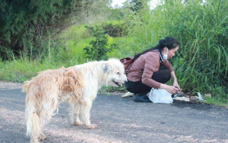 Собака 4 года ждала хозяина на обочине и дождалась. История тайского Хатико со счастливым концом